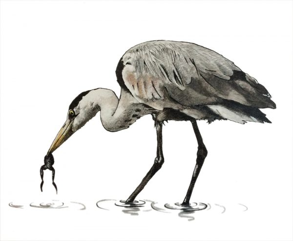 Drawing of a heron